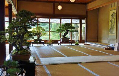 10月7日より、清遠閣盆栽展を開催
