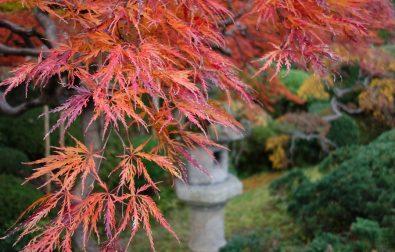コラム更新「紅葉美しい秋の鶴舞園」