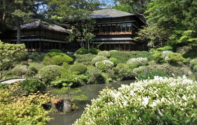 鶴舞園のツツジが咲き始めました。