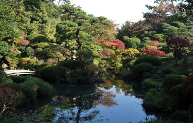 特別展示「阿部辰修写真展 未来へ伝えたい、美しき鶴舞園」(11/1~14)